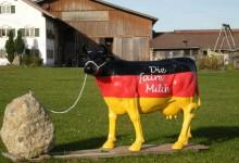 Milchpreis-Verfall: Rußland-Sanktionen treiben deutsche Milchbauern in den Bankrott