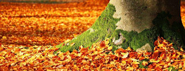 Grüne in Hessen lassen den Reinhardswald abholzen – Teile des Naturparks sollen Windrädern weichen